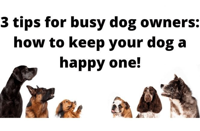 3 tips for busy dog owners: how to keep your dog a happy one!