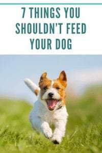 7 Things You Shouldn't Feed Your Dog
